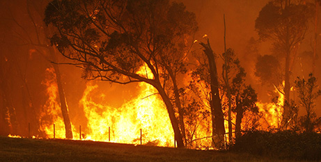 Fire rips through a forest on the outskirts of Labertouche, Victoria, on Black Saturday, 2009 (CNS/Mick Tsikas, Reuters)