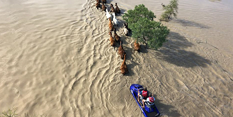 Farmers use a jet ski to wrangle their horses through flooded fields in North Queensland (The Catholic Leader/Robbie Katter)