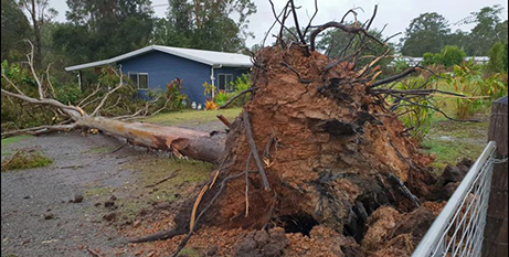 The thunderstorm caused this tree to fall at a Gympie nursery (Facebook/K and M Nurseries)