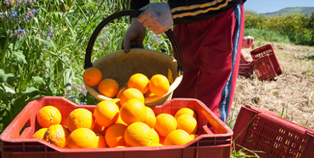 The report aims to better protect seasonal workers (Bigstock)